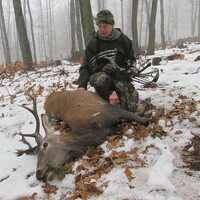 Deer and Boar Cull Package (3 animals)