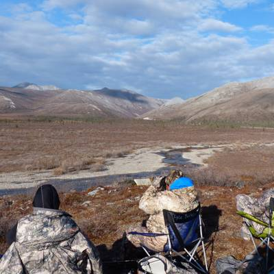 Dall Sheep Hunt 1x1