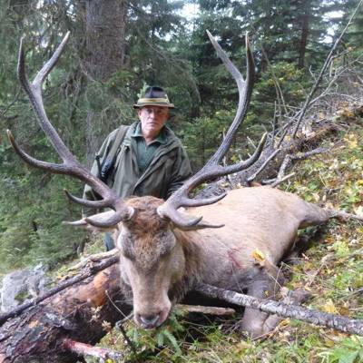 Red deer 1x1 hunt in Austria