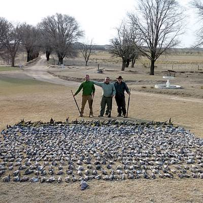 3 Day Pigeon Shooting in La Pampa