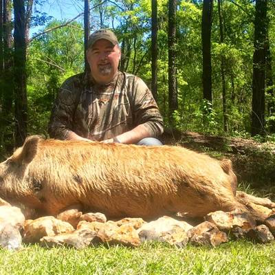 Deer & Hog Combination Hunt