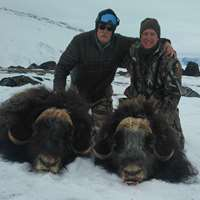 Last Spots! Muskox Winter Hunt 2020