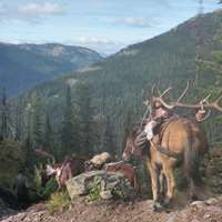 General Season 5-day Elk & Deer Hunt'20