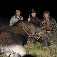 Moose Trophy Hunt