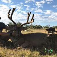 Coues/Mule Deer Archery