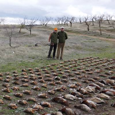 Partridge, Pheasant & Thrush - 3-6 guns