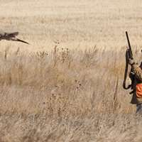All-Inclusive Pheasant Hunt