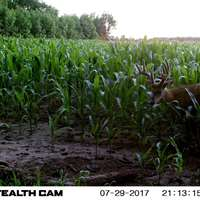 Whitetail Deer Youth Hunt