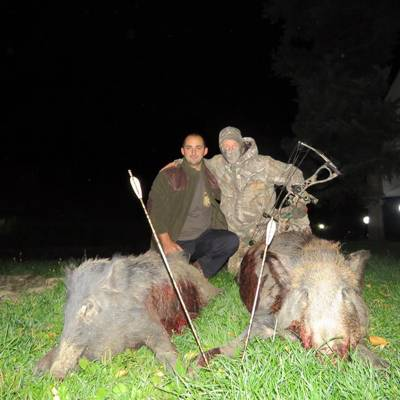Feral Pigs Bow Hunting in Bulgaria