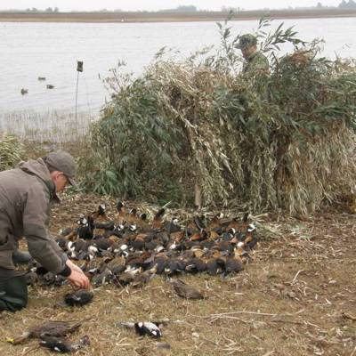 Duck Hunting in Humid Pampa