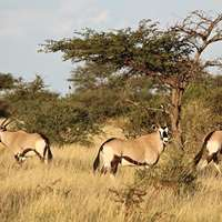Namibian Hunting Experience 1x1
