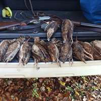Woodcock hunt