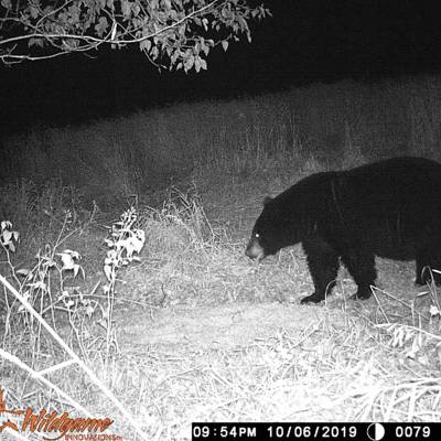 Fall Black Bear Hunt 2020
