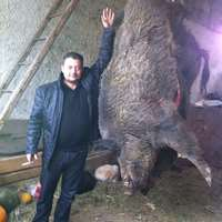 Wild Boar Driven Hunt inkl. Trophies