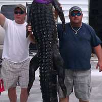 2020 Alligator Hunt $500 per foot