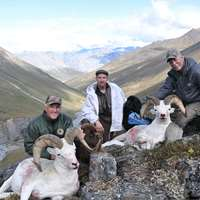Dall, Moose, Grizzly Combo hunt 2021