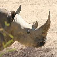 Rhino Cancellation Hunt Special Package