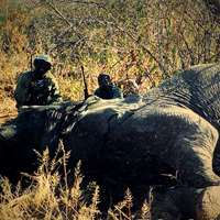 10 days Elephant Hunt (up to 50 lbs) '19