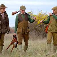 Pheasants driven hunt