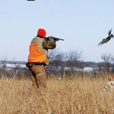 Upland Field Pheasant 10 Birds Limit