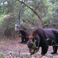 5 Day/4 Night Black Bear Hunt
