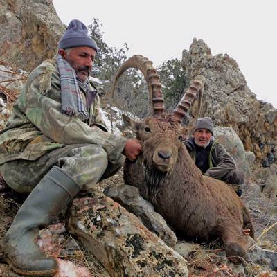 Ultimate Ibex Hunt 2019