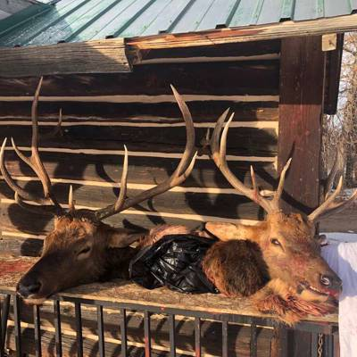 5 Day Bull Elk Trespass Fee Hunt