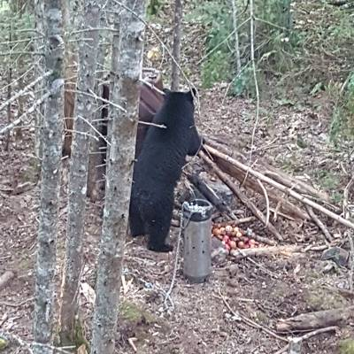 2019 Black Bear Hunt Single Person