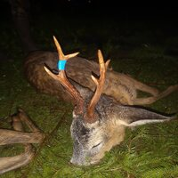 Roe Buck Hunting in Czestochowa