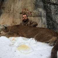 Mountain Lion Hunt Day Rate