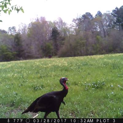 Self-guided 3 Day Turkey & Hogs Hunt