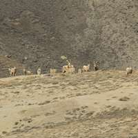Ultimate Ibex Hunt 2020