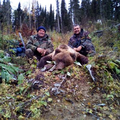 Siberian brown bear spring hunt in 2021