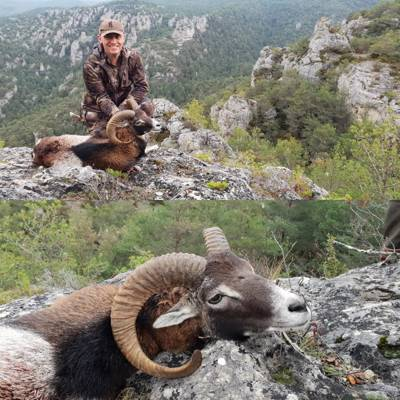 Mouflon Hunt in Ariège
