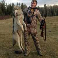 6 Day Winter Wolf/Coyote Baited Hunt