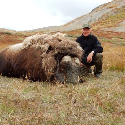Helicopter Muskox & Caribou Hunt