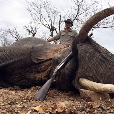 Under 50 Pound Elephant Bull Hunt