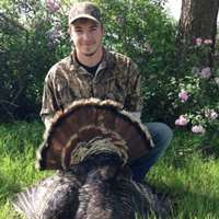 Semi-guided Turkey Hunt (1 bird)