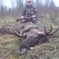 Special Moose Hunt in Latvia