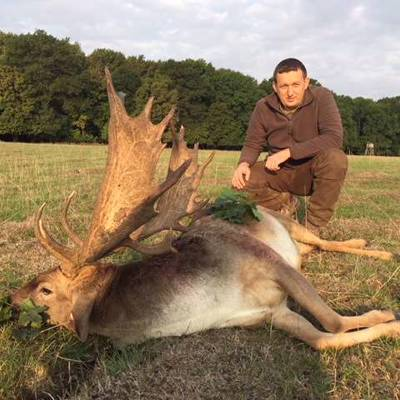 Fallow Stag Hunt