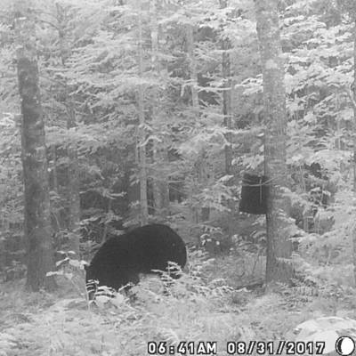 Black Bear Over Bait Week 1 (2019)