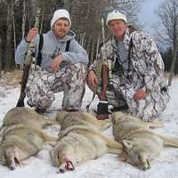 3 Days Coyote Hunt