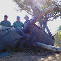 7 days Elephant Package (up to 30 lbs)