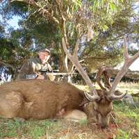 Trophy Sambar and Rusa Stag Hunt 1x1