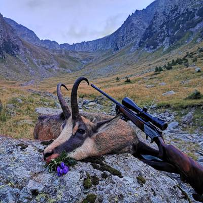 Chamois Hunt for Any Hunter + Trophy fee