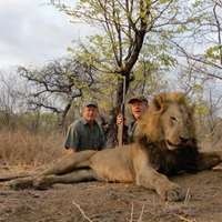 18 Day Lion Hunt