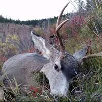 7-day Whitetail or Mule Deer Hunt 2x1