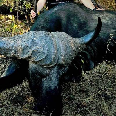 7 days Cape Buffalo Hunt