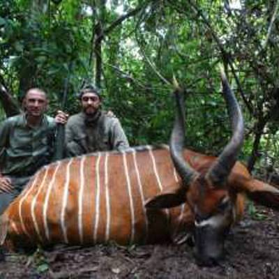 Cameroon Forest Hunt