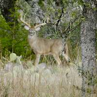 Venison Meat Hunt Package 2020